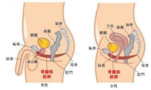 骨盤底筋群について